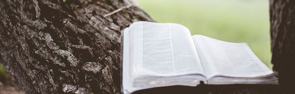 Bible in Branch