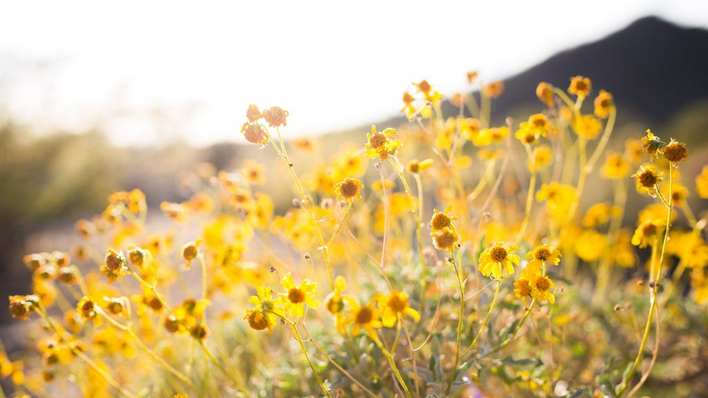 closeup-photo-of-yellow-petaled-flowers