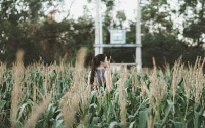 Understanding God's kingdom means listening to the Sower!