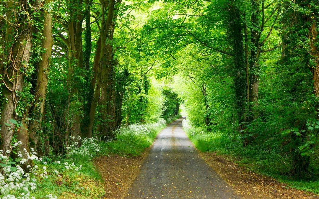 Follow the Right Way—God's Way!