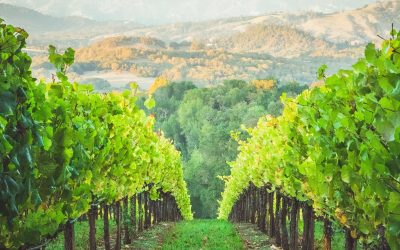 Be a Fine Vine!
