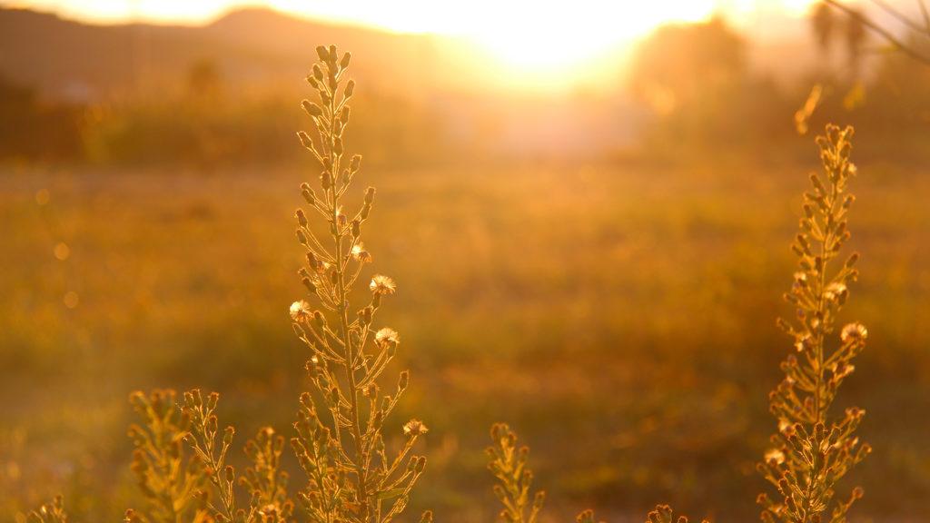 sun-lighting-grass-field