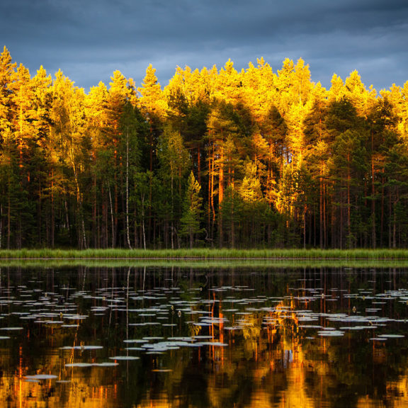 yellow-and-green-leafed-trees-reflecting-lake